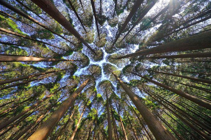 硫黄谷神社や百年杉庭園も散策できる「硫黄谷温泉 霧島ホテル」