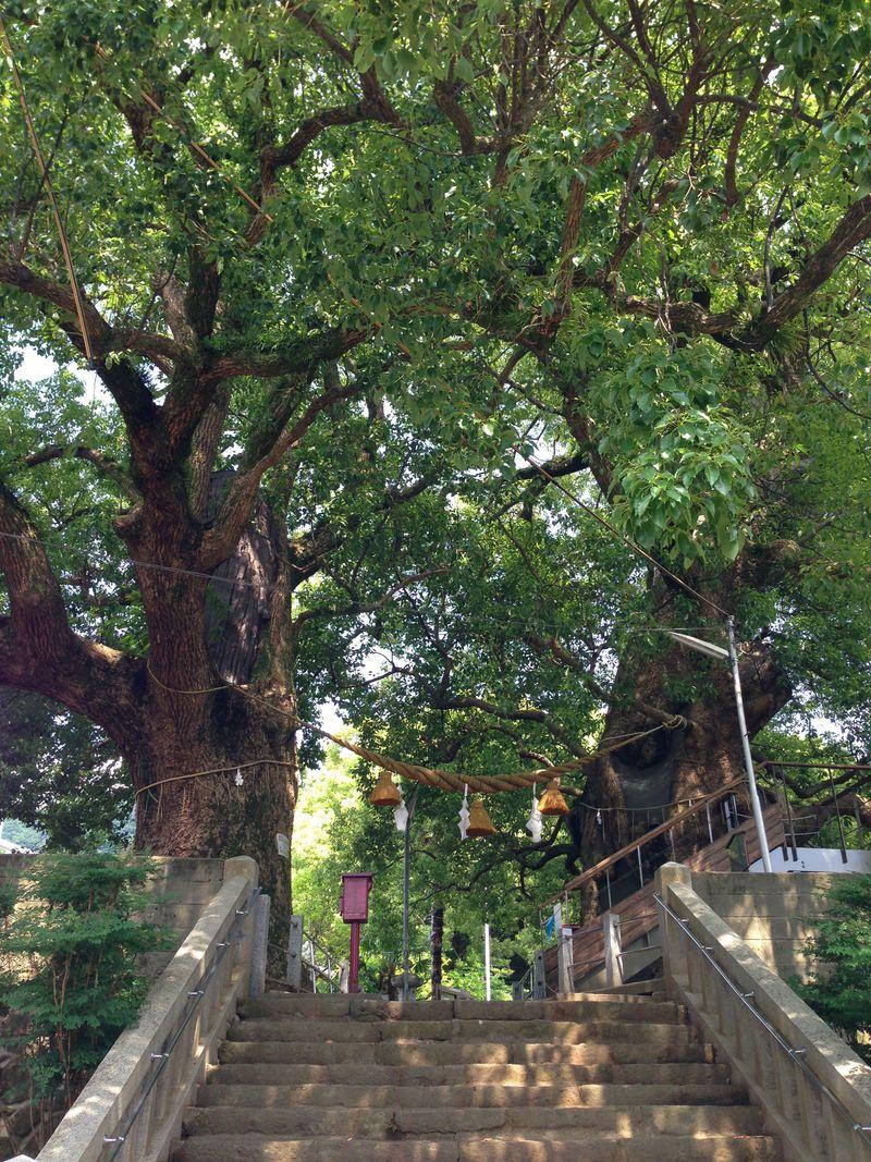 福山雅治も歌う被爆「クスノキ」〜長崎・山王神社の大楠は生命力溢れる奇跡の木