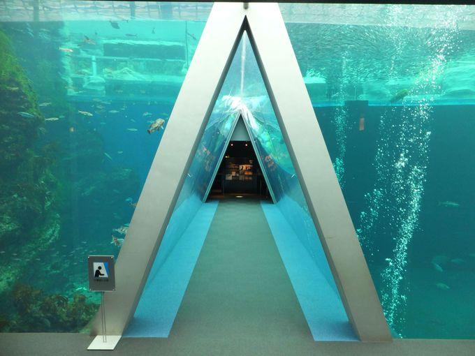 海の中に潜り込んだかのよう!多彩な魚たちが競演する「潮目の海」