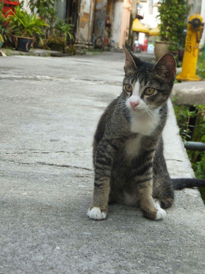 街を歩けば出会える可愛らしい猫たち