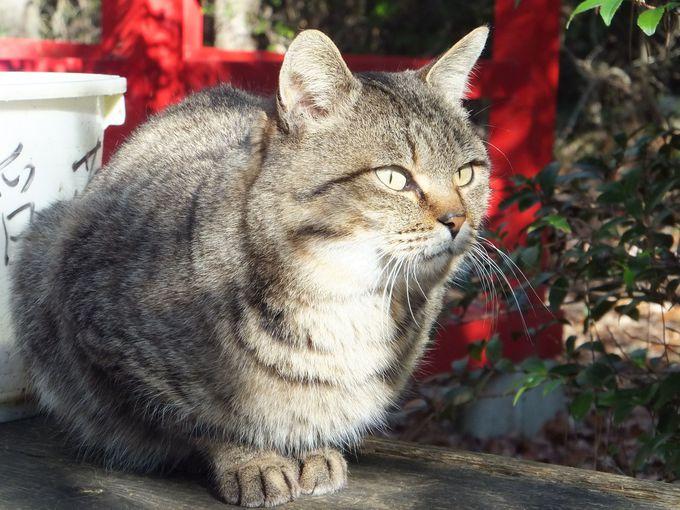 「猫神社」〜猫たちが守るパワースポット!