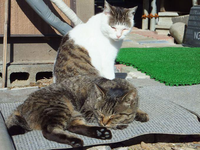 「仁斗田」〜田代島で最も猫が多い場所!