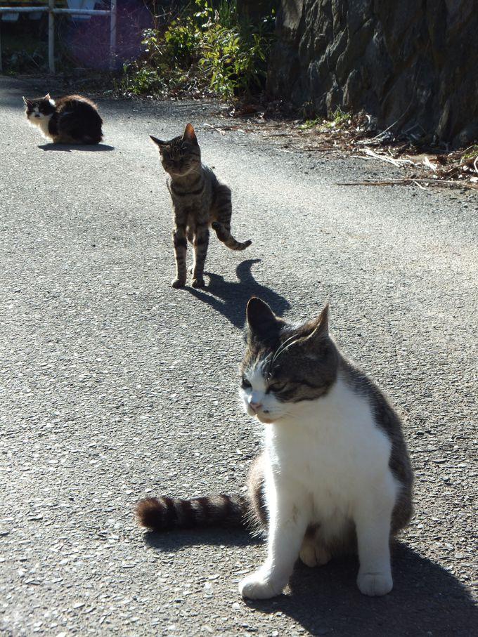 「マンガアイランド」〜猫が集まる猫型ロッジ!