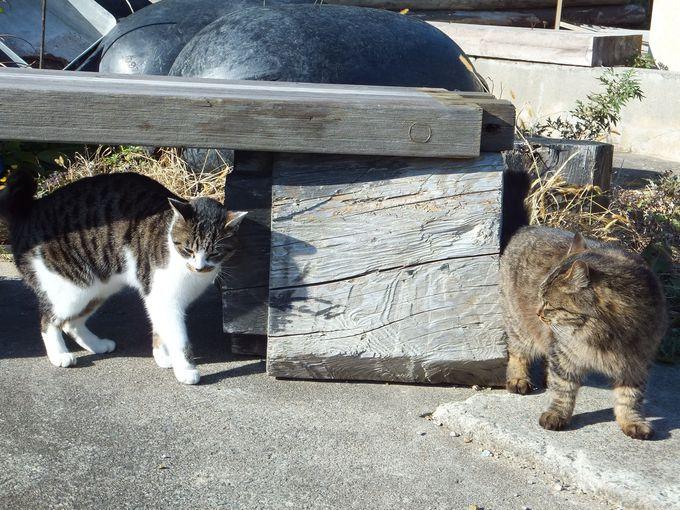 「大泊」〜猫が暮らすもうひとつの集落!