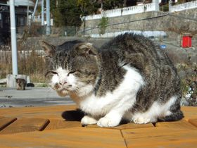 元祖・猫島の歩き方!宮城県「田代島」の猫出没スポット4選