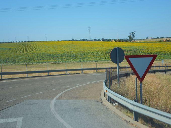 これぞスペイン!ひまわり畑が広がるカルモナ周辺
