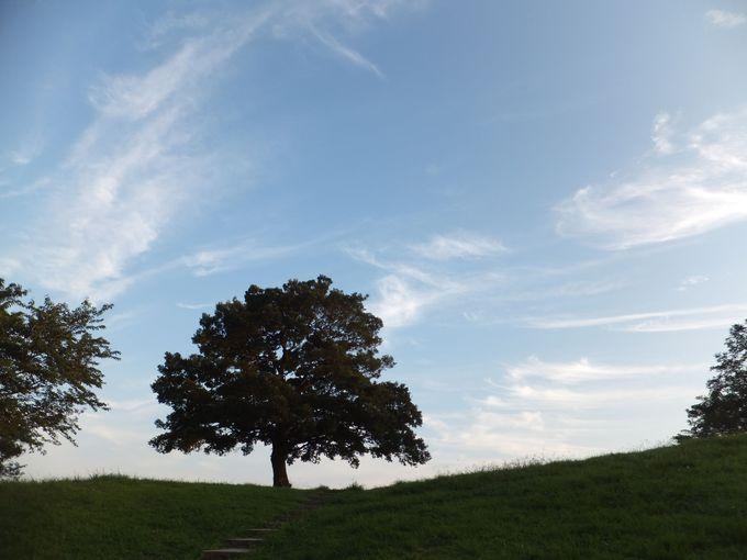 夕暮れ時も美しい!「ゆずの木」のシルエットが浮かび上がる
