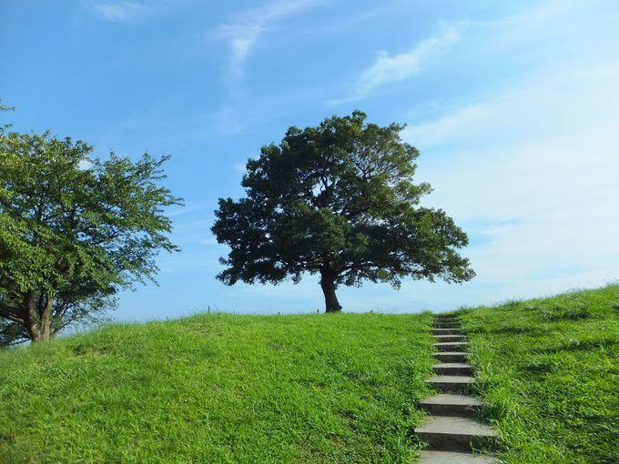 ゆずっこの聖地!ゆずの2人が歌っていた「ゆずの木」