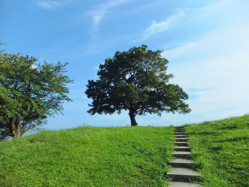 緑の丘の「ゆずの木」へ。横浜・清水ヶ丘公園はゆずっこ聖地&ロケ地のメッカ!