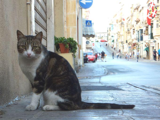 猫好きの聖地!70万匹もの猫が暮らす「マルタ共和国」