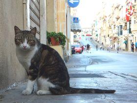 世界一のにゃんこアイランド!?猫たちの楽園「マルタ共和国」の魅力