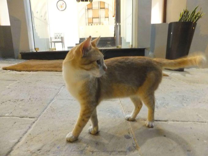 どこで猫に会える?マルタの猫出没スポット