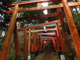 まるでジブリ映画の世界!横須賀「伏見白赤稲荷社」は山奥へ続く鳥居が神秘的な神社