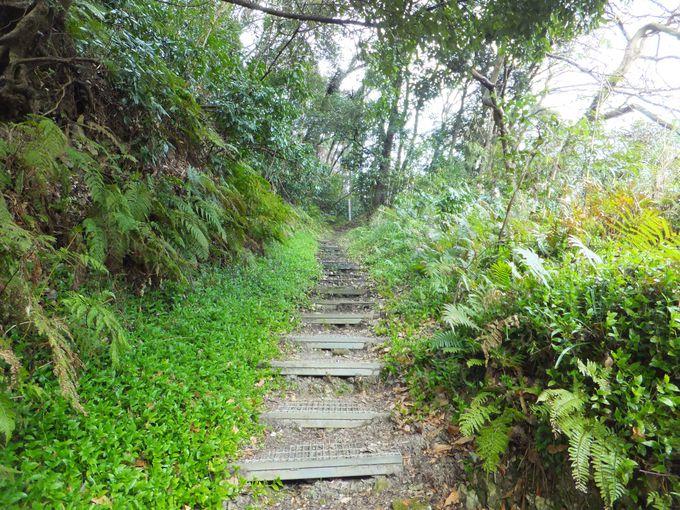 山道をひたすら登る