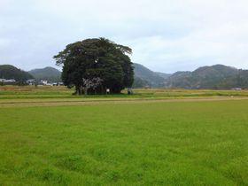 トトロの森へようこそ。鳥取「客神社」がまあるくて可愛い!