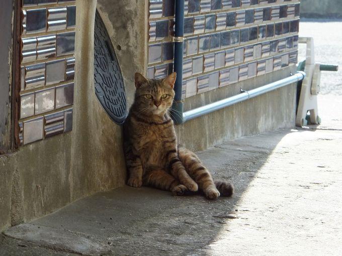 可愛らしい猫たちのあとを追って