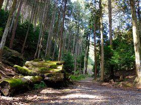「まんぷく」の森はここ!滋賀・日吉大社でトゥラッタッタ