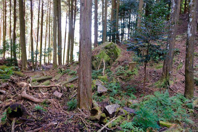 福ちゃん気分で歩きたい!「まんぷく」オープニングの森