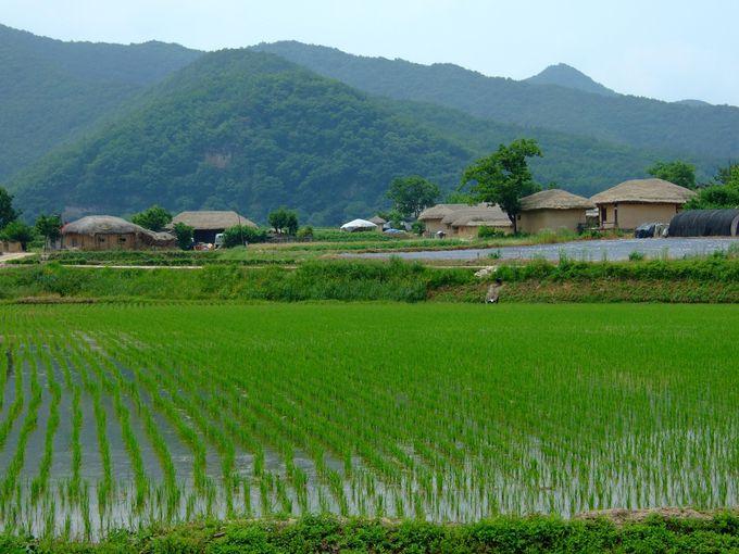 韓国の原風景!世界遺産・河回村のある「安東」