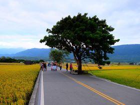目指すは「金城武の木」!台湾・池上で田園サイクリング