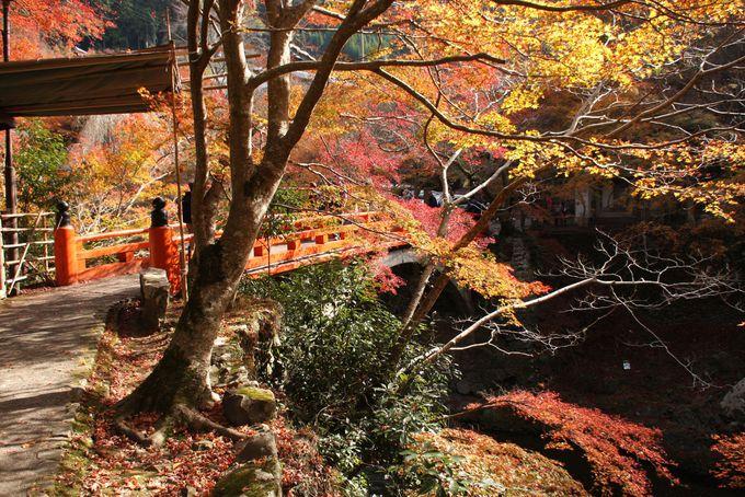 朱塗りの指月橋からの景観が美しい