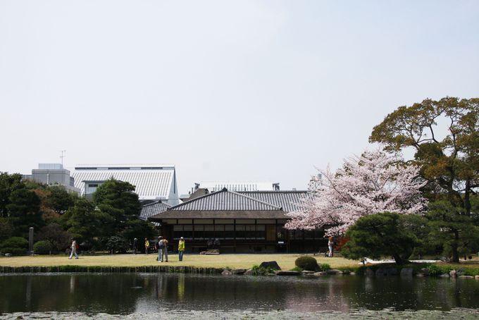 京都タワーと桜のコラボ!