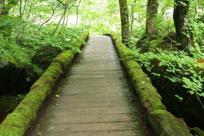 奥入瀬渓流の苔むした橋がフォトジェニック