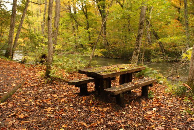 奥入瀬渓流散策のオススメの季節、駐車場情報