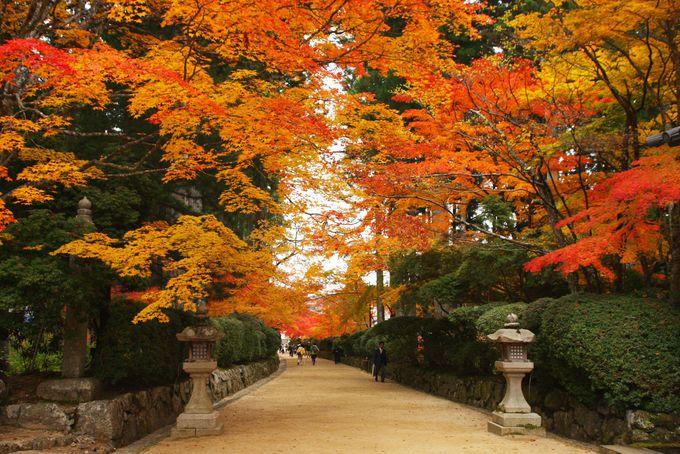 美しすぎる紅葉のトンネル 蛇腹道
