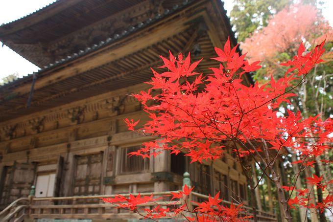 檀上伽藍は紅葉を見ながらの絶好のランチスポット