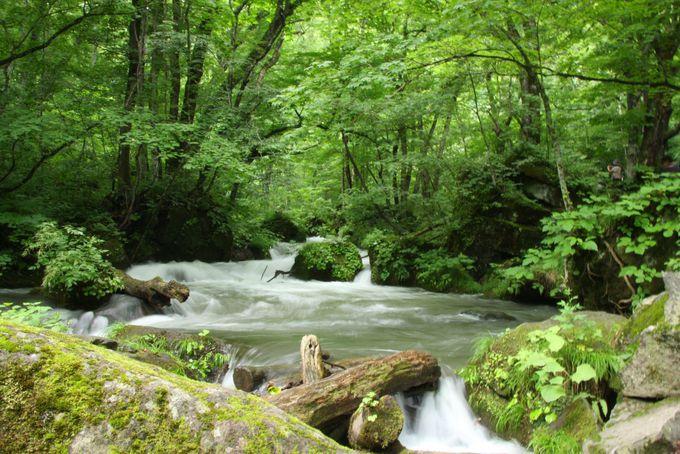 絶景ポイント目白押し「奥入瀬渓流」をのんびり散策