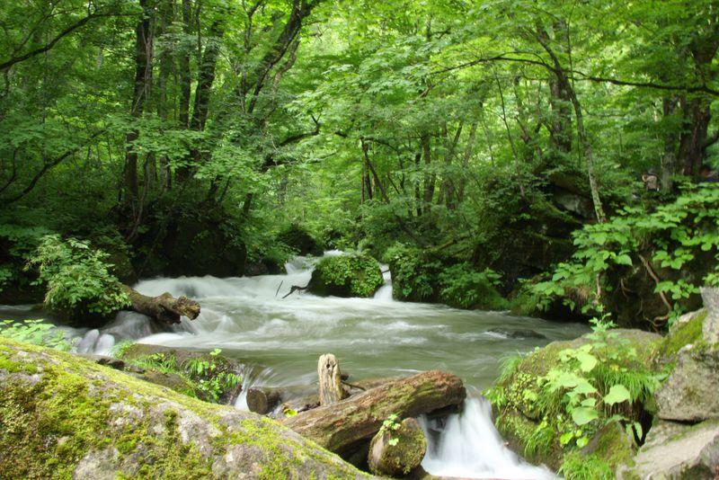 奥入瀬渓流と周辺のおすすめ観光スポット10選 自然を満喫しよう!