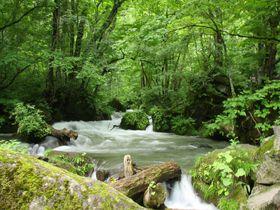 奥入瀬渓流の美しい散策道!おすすめ撮影スポット9選