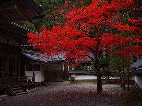 高野山観光のベストシーズンは秋の紅葉!見頃は11月上旬