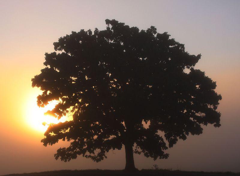 秋の美瑛で奇跡の絶景に出会う!セブンスターの木が燃える、大雪山系の霧があける瞬間をキャッチしよう!