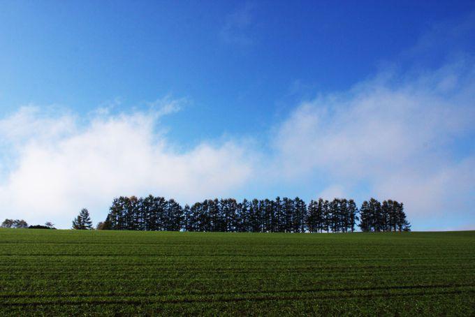 2日目:「マイルドセブンの丘」〜「ケンとメリーの木」〜「セブンスターの木」で美瑛を制覇
