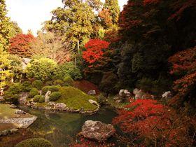 京都・穴場紅葉スポット!大奥ロケ地の青蓮院門跡でお抹茶と紅葉と日本庭園を堪能!
