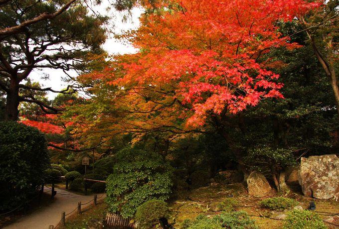 庭園内で紅葉散歩
