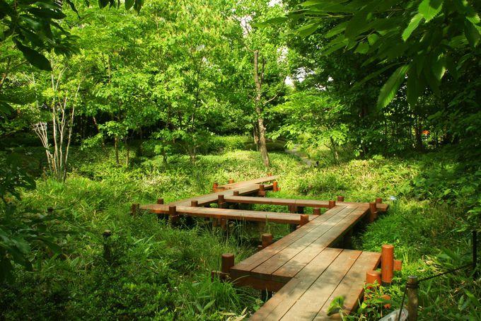 都会のオアシス 中自然の森と里山