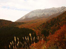 山の岩肌を染める紅葉に絶句!ぐるっと大山紅葉ドライブの見どころ