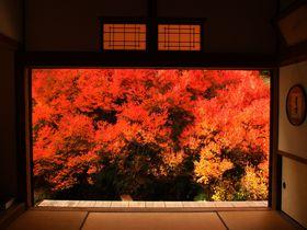 まるで1枚の絵画のような紅葉!兵庫県「安国寺」ドウダンツツジ
