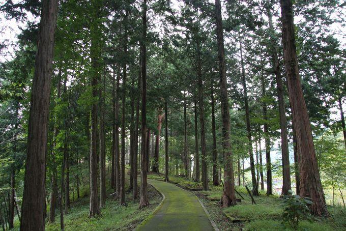 約2kmの森の散策路