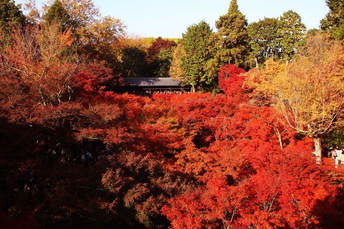 一度は見たい東福寺の紅葉