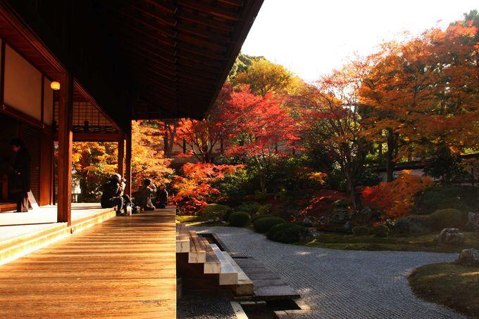 東福寺も近い穴場の紅葉スポット「泉涌寺」