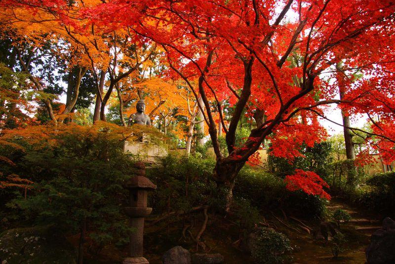 京都の無料で見られる紅葉の散歩道!金戒光明寺エリアのおススメスポット!
