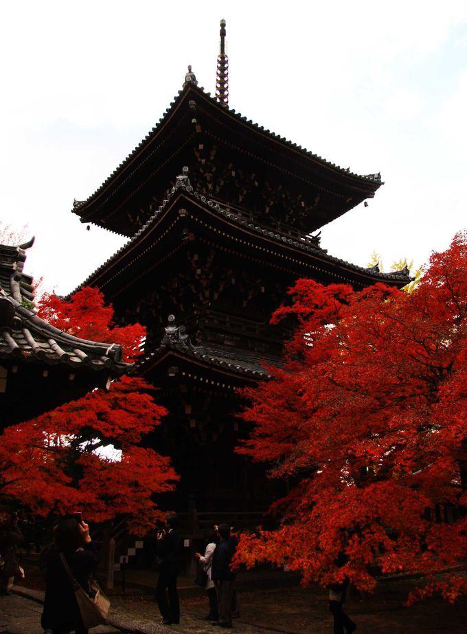 紅葉越しの三重塔