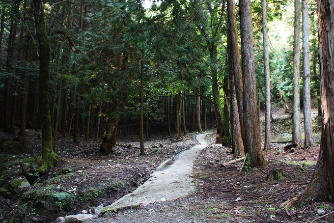 多彩なハイキングコース