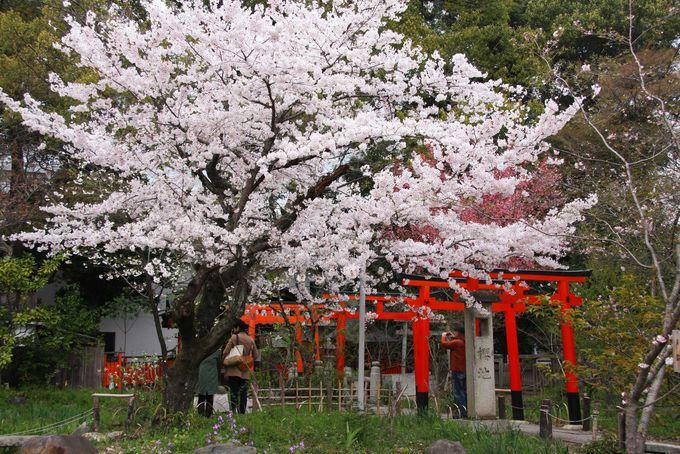 平野神社の穴場桜スポット