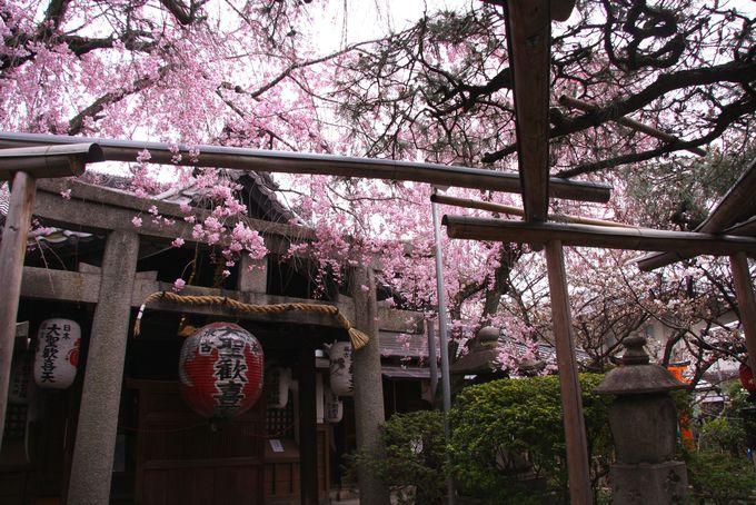 西陣の隠れた花の寺「雨宝院」