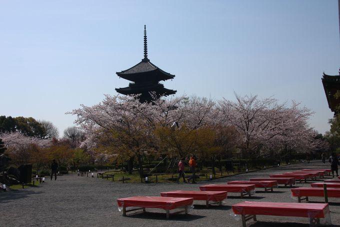 吉野桜も咲き乱れる